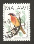 Stamps : Africa : Malawi :  ave, malaconotus multicolor