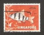 Stamps Singapore -  pez puntius hexagona