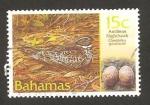 Stamps : America : Bahamas :  ave chordelles gundlachii