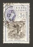 Stamps Africa - Sierra Leone -  elizabeth II, recogida de arroz