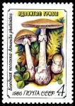 Stamps Russia -  AMANITA PHALLOIDES