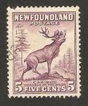 Stamps : America : New_Foundland :  fauna, reno o caribu