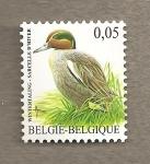 Stamps Belgium -  Cerceta común