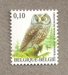 Sellos de Europa - Bélgica -  Mochuelo boreal