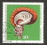 Stamps Germany -  mascara de baile de las islas del mar del sur