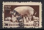 Sellos de Europa - Bulgaria -  Animales:Cerdos.