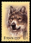 Stamps Russia -  WOLF