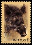 Stamps Russia -  BOAR