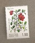Sellos de Europa - Rusia -  Vaccinium vitis-idaea