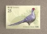 Stamps Asia - Taiwan -  Faisán Mikado