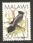 Stamps : Africa : Malawi :  ave, trochocerus albonotatus