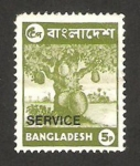 Stamps Bangladesh -  flora, jacquier
