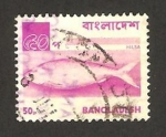 Stamps : Asia : Bangladesh :  pez hilsa