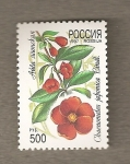 Stamps Russia -  Chaenometes japonica