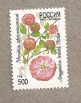 Stamps Russia -  Amygdalus triloba