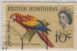 Stamps America - Belize -  Ara macao