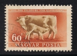 Stamps Hungary -  Vaca con ternero.