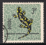 Sellos de Europa - Polonia -  Salamandra.