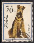 Sellos de Europa - Polonia -  Airedale terrier.