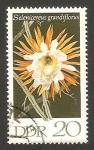 Stamps Germany -  flor selenicereus grandiflorus