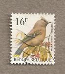 Sellos de Europa - Bélgica -  Ave Ampelis europeo