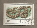 Stamps Russia -  Serpiente venenosa