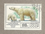 Stamps Russia -  Oso polar