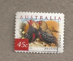 Stamps Australia -  Ave stagonopleura bella