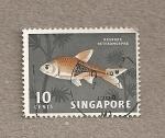 Sellos del Mundo : Asia : Singapur : Pez Rasbora heromorpha