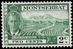 Sellos de Europa - Reino Unido -  MONTSERRAT-Cultivos de algodón
