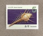 Stamps Asia - Taiwan -  Concha Murex troscheli