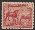 Stamps Europe - Belgium -  Ganado Watusi