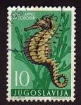 Stamps Yugoslavia -  Hipocampus anticuorum