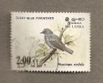 Stamps Asia - Sri Lanka -  Pájaro atrapamoscas azul del crepúsculo