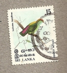 Sellos de Asia - Sri Lanka -  Loro ceilandés