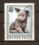 Stamps Hungary -  PERRRITO