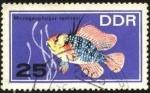 Sellos de Europa - Alemania -  Microgeophagus ramirezi.