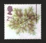 Stamps United Kingdom -  2379 - Navidad, ramas formando una estrella