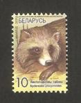 Stamps : Europe : Belarus :  fauna salvaje, raton laveur
