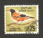 Sellos del Mundo : Asia : Sri_Lanka : pájaro oriol