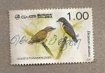 Stamps Sri Lanka -  Picoteador de flores