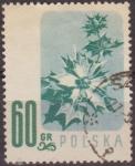 Sellos de Europa - Polonia -  Polonia 1957 Scott 783 Sello Flora Flor Sea Holly Usado Polska Poland Polen Pologne