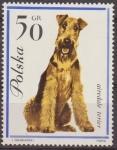 Sellos de Europa - Polonia -  Polonia 1963 Scott 1118 Sello Nuevo Fauna Perros Airedale Terier Polska Poland Polen Pologne