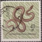 Stamps Poland -  Polonia 1963 Scott 1135 Sello Fauna Reptiles Culebra Lisa Europea Coronella Austriaca Usado Polska