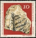 Sellos de Europa - Alemania -  F�sil del Museo de historia natural de Berl�n. Alteste Nadelgeh�lze. Lebachia speciosa.