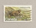 Stamps America - Canada -  Marmota