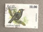 Stamps Asia - Sri Lanka -  Ave Minah de las colinas