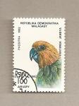 Sellos de Africa - Madagascar -  Ave Aratinga jandya