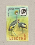 Stamps Africa - Lesotho -  Ave Balearica regulorum