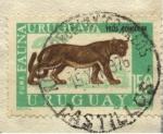 Sellos de America - Uruguay -  Fauna uruguaya. El Puma,  Felis concolor. En la actualidad es una especie extinguida.